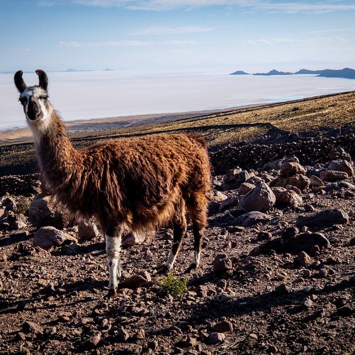 Bolívie 2019